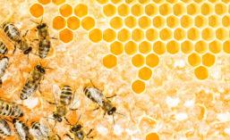BellFlavors_Bees_900