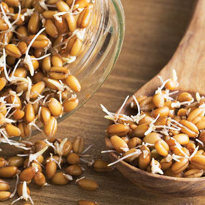 Kernels of Sprouting Wheat