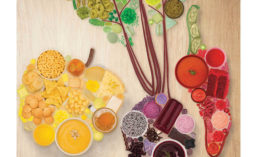 Array of Colored Foods