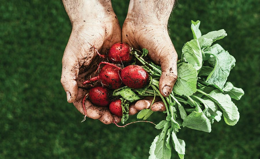 Handful of Beets