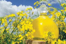 flowers, oil