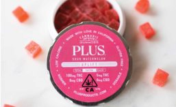 PLUS Cannabis Infused Gummies Tin