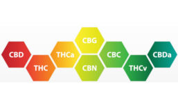 Cannabinoids Molecules Graphic
