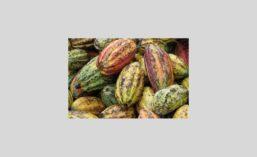 Cacao900.jpg