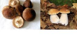 Mushrooms422