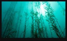 Seaweed_900