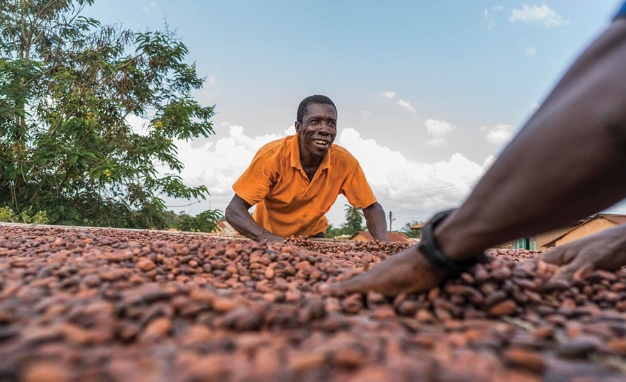 How to grow COCOA in Uganda |Coco Africa