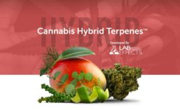 Lab Effects terpenes
