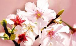 Kerry_Botanicals_2021_900