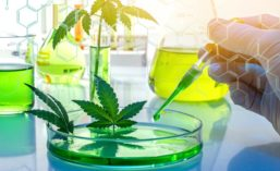 Cannabis Leaves and Science Lab