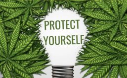 Protect Yourself Lightbulb in Cannabis Leaves